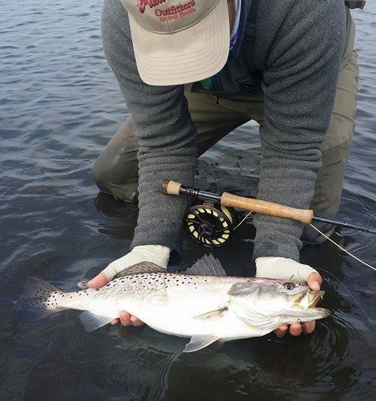 Fly fishing Charter Florida- Homosassa