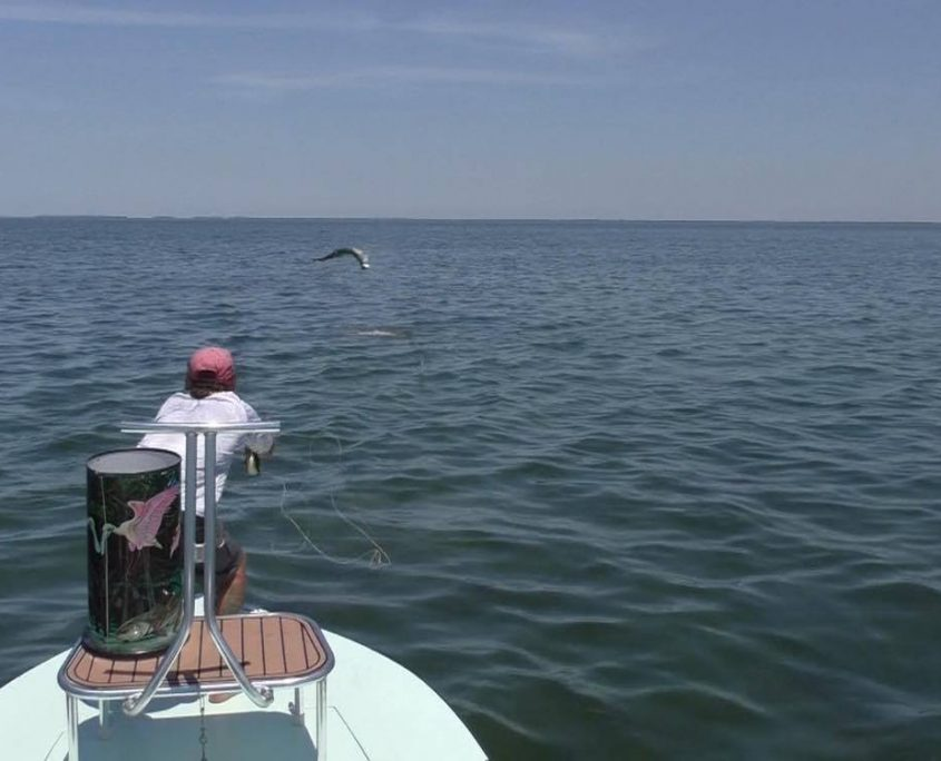 jumping Tarpon on fly