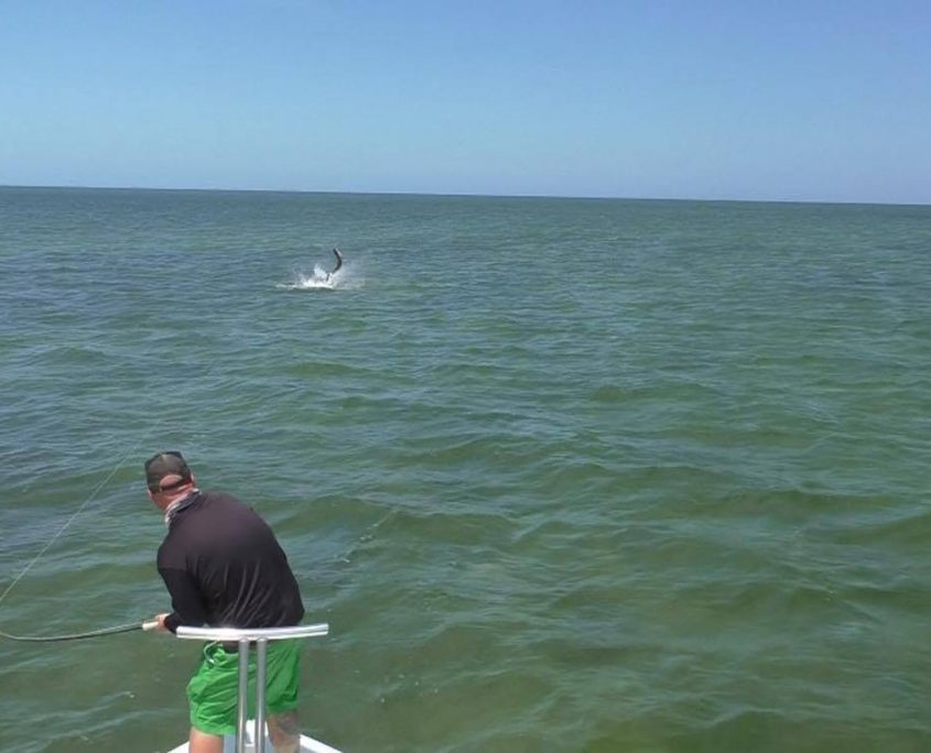 Tarpon fly fishing guide charter