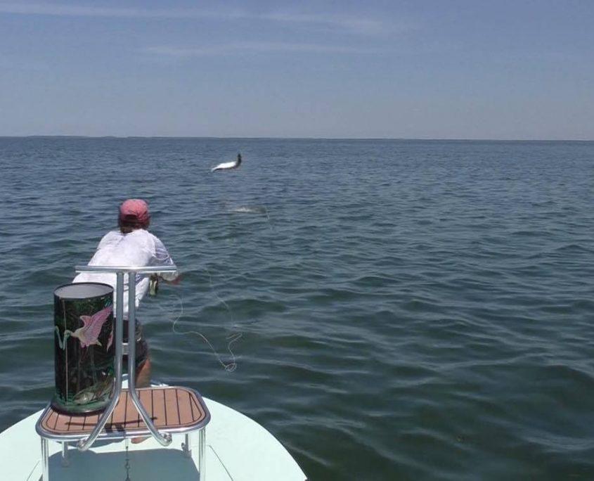 orvis tarpon fishing