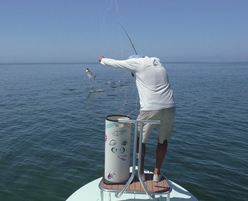 Tarpon Fly Fishing Guide Florida