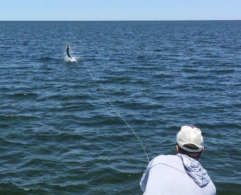 Tarpon fly fishing homosassa