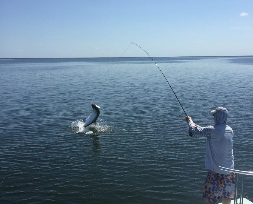 Tarpon fly fishing guide
