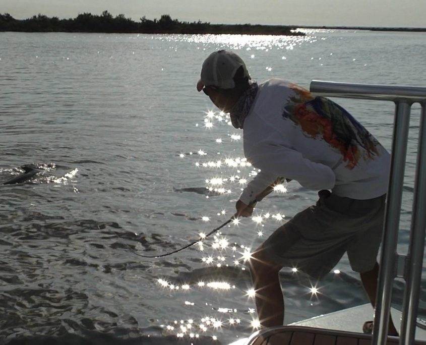 Tarpon Fly Fishing Bayport Florida