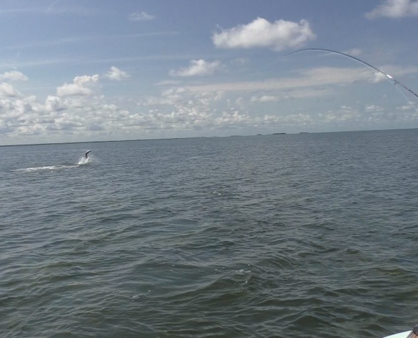 Tarpon Fly Fishing Guide Crystal River