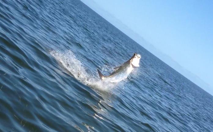 Tarpon Fly Fishing Guide Homosassa Florida